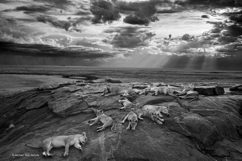 wildlife-photographer-of-the-year-2014-02